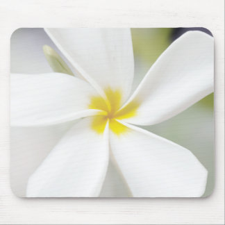White Plumeria - Macro Portrait Mouse Pad