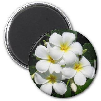 White Plumeria on Magnet