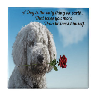 White poddle dog puppy with a red rose Dog Quote Tile