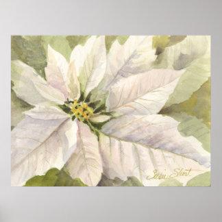 White Poinsettia Poster
