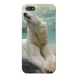 White Polar Bear Hunter on rock Cover For iPhone 5/5S