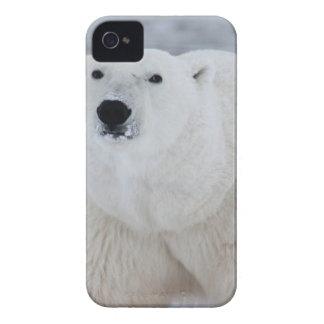 White Polar Bear iPhone 4 Case-Mate Cases
