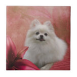 White Pomeranian Dog Flowers Animal