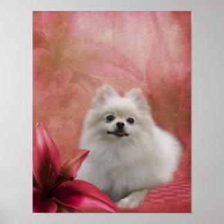 White Pomeranian Dog Lily Flowers Poster