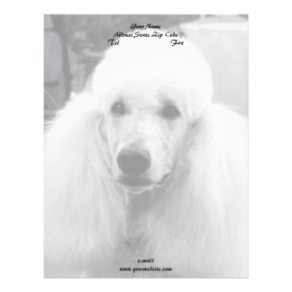 White poodle dog black and white stationary letterhead