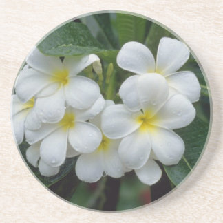 white Prestine cluster of temple flowers flowers Beverage Coasters