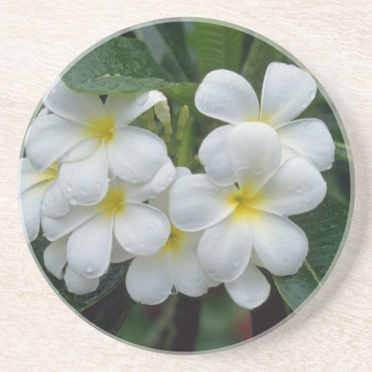 white Prestine cluster of temple flowers flowers Coaster