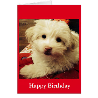 White Puppy on Red Blanket Happy Birthday card