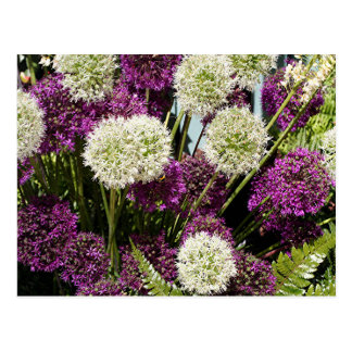 White & purple allium flowers postcard