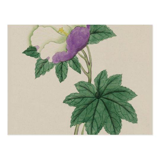White Purple Flower Vintage Botanical Print Postcard