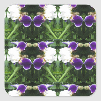 White Purple Green Show CherryHILL NVN217 NavinJOS Square Sticker