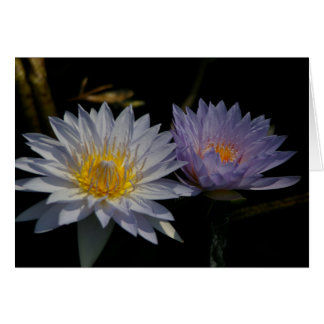 White & Purple Lotus Waterlily Card