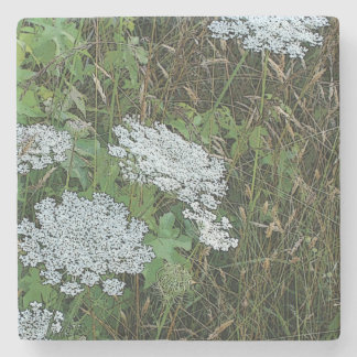 White Queen Anne's Lace Wild Flower Stone Beverage Coaster