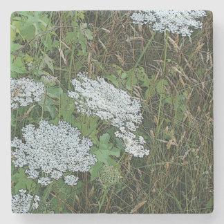 White Queen Anne's Lace Wild Flower Stone Coaster