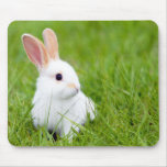 White Rabbit Mousepad
