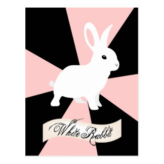White Rabbit, Pink and White Postcard