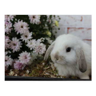 white rabbit, rabbit with flowers Easter bunny Postcard