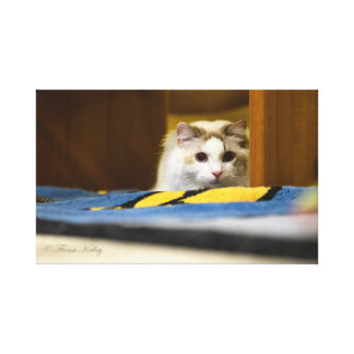 White Ragdoll Cat Wrapped Canvas