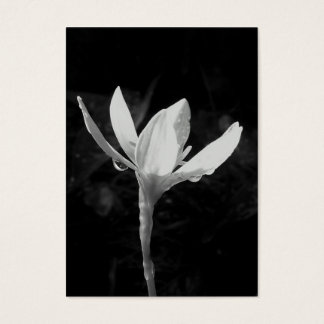 White Rain Lily ATC Photo Card