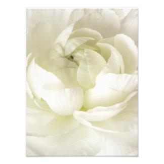White Ranunculus High Key Flower Template Custom Photo