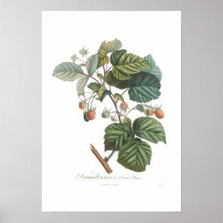 White Raspberry Poster