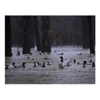 White River National Wildlife Refuge, Arkansas Postcard