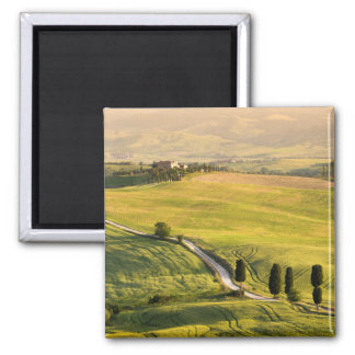 White road in Tuscany landscape magnet