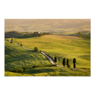 White road in Tuscany landscape poster
