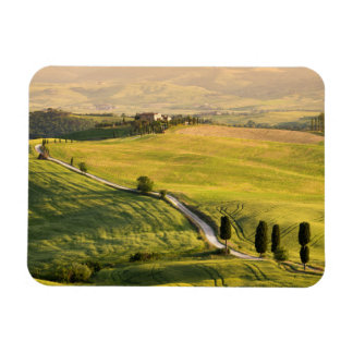 White road in Tuscany landscape rectangle magnet