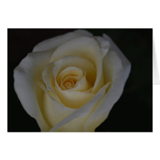 White Rose and meaning Card