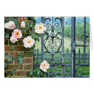 white Rose And Wrought Iron Gate flowers Card
