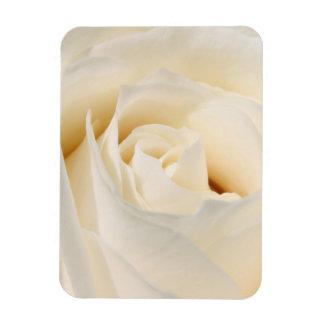 White rose blossom rectangular photo magnet