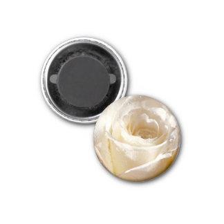 white rose magnet