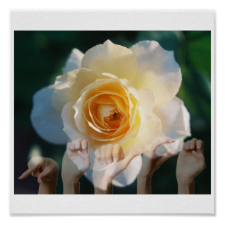 White Rose of  Peace - ASL Poster