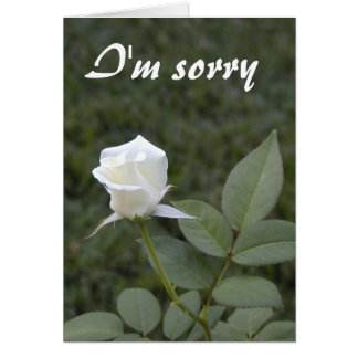 White rosebud apology card