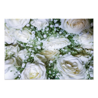 White roses photo print