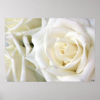 White Roses, S Cyr Poster