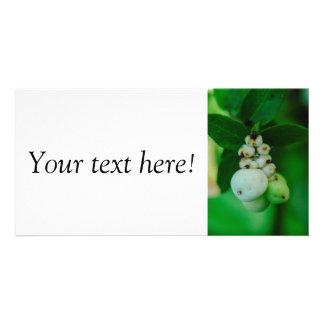 White round plant fruits macro photo card