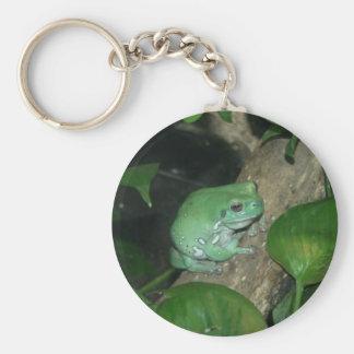 White s Tree Frog Dumpy Frog Keychain