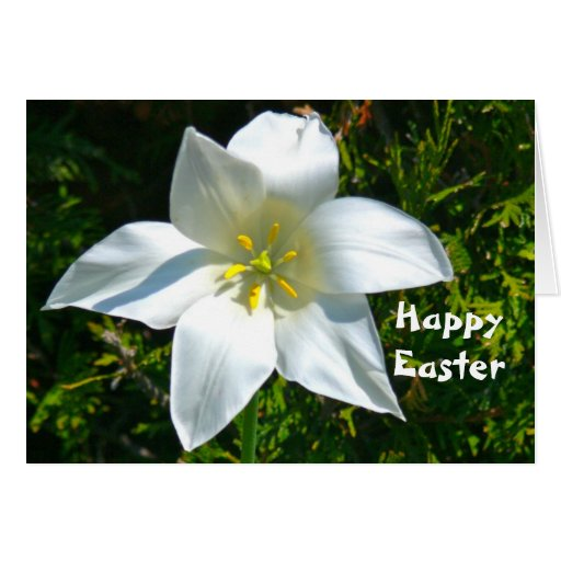 WHITE SATINY LILY / HAPPY EASTER GREETINGS CARDS
