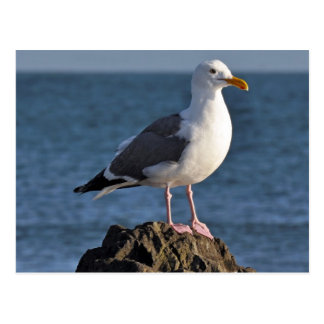 White seagull and ocean postcard