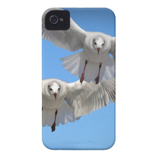 White Seagulls In Flight iPhone 4 Case