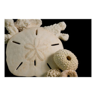 White Seashells And Sand Dollar Poster
