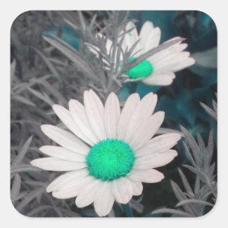 White Shasta Daisy (w/Aqua) Stickers