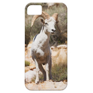 White Sheep Of The Family Case For The iPhone 5