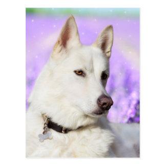 White Shepherd Dog Postcard