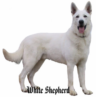 White Shepherd Photo Sculpture