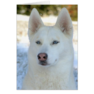 White Siberian Husky notecard or greeting card