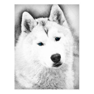 White Siberian Husky w/ Blue Eyes Fine Art Sketch Postcard