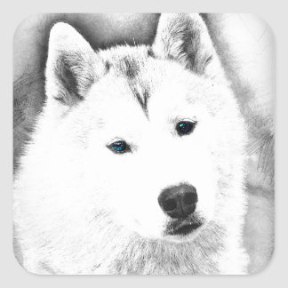 White Siberian Husky w/ Blue Eyes Fine Art Sketch Square Sticker